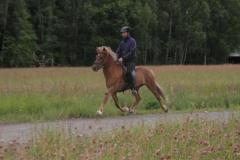 meitill - 14