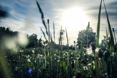 Snäcksjöns-islandshästar-Öregrund-IMG_6470