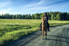 Snäcksjöns-islandshästar-Öregrund-IMG_8554