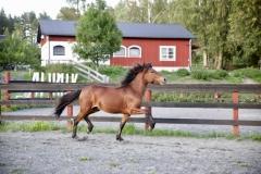 hervar-7-1