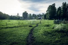 Snäcksjöns-islandshästar-Öregrund-IMG_6464